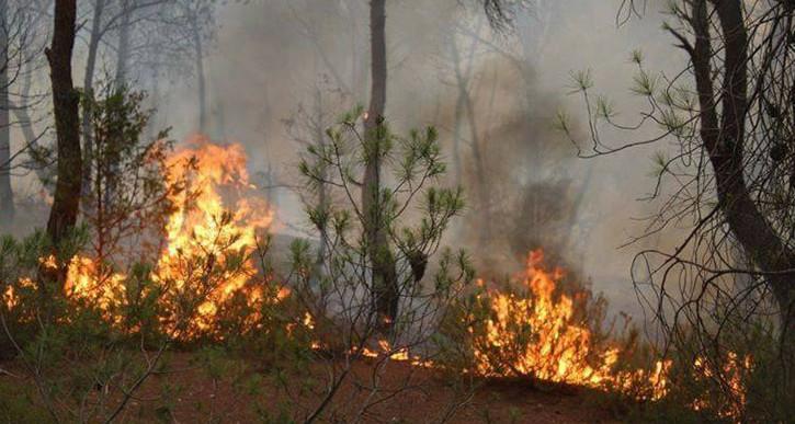 السيطرة على حريق في هذه الغابة