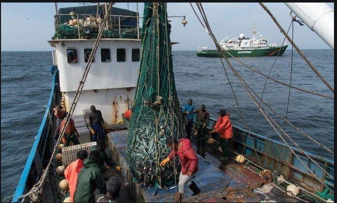 ارتفاع صادرات منتوجات الصيد البحري