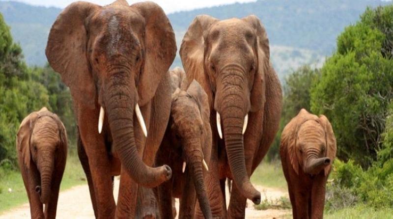 فيل يقتحم منزلا بحثا عن الطعام (فيديو)