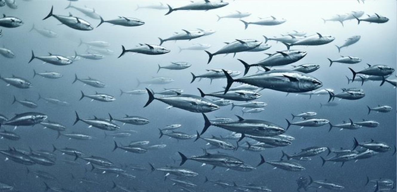 إلقاء  الأسماك من الجو لإعادة الحياة في بحيرة أمريكية (فيديو)