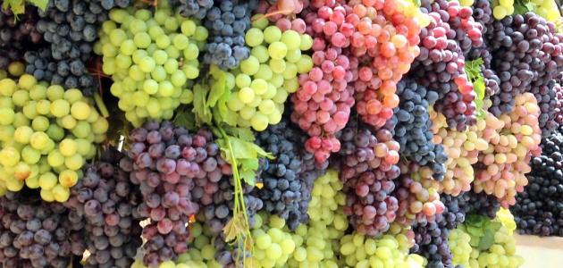العنب …صديق الكبد و البشرة