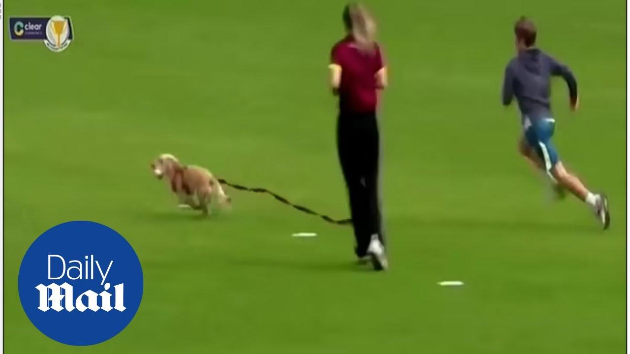 كلبة تفاجئ لاعبات وتقتحم الملعب لتخطف الكرة (فيديو)