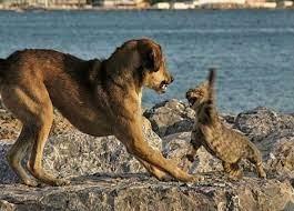 """كلب يطارد قطا إلى """"قمة الهاوية"""" (فيديو)"""